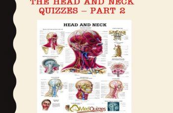 Anatomy] The Abdomen quizzes – Part 5 (20 questions) - MedQuizzes