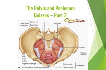 Anatomy] The Pelvis and Perineum Quizzes – Part 5 (20 questions ...