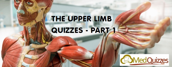 Anatomy] The Head and Neck Quizzes – Part 6 (20 questions) - MedQuizzes