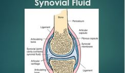 The Quizzes about Synovial Fluid