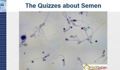 The quizzes about Semen